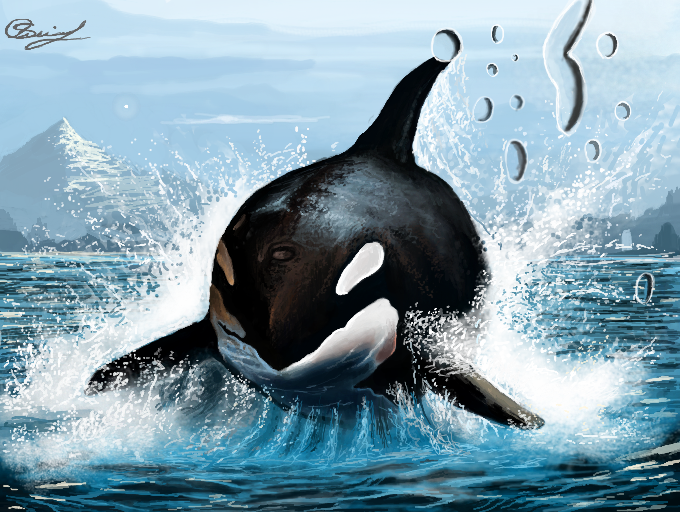 Orcas by MO-SAID