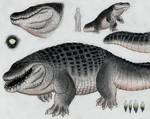 The Fat Croc