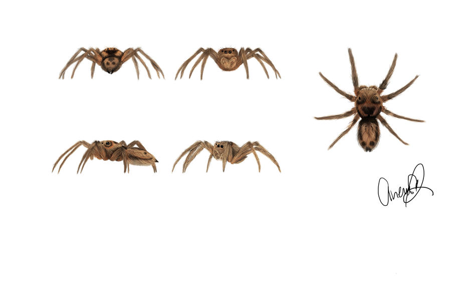 Jumping spider study by AriaWho on DeviantArt