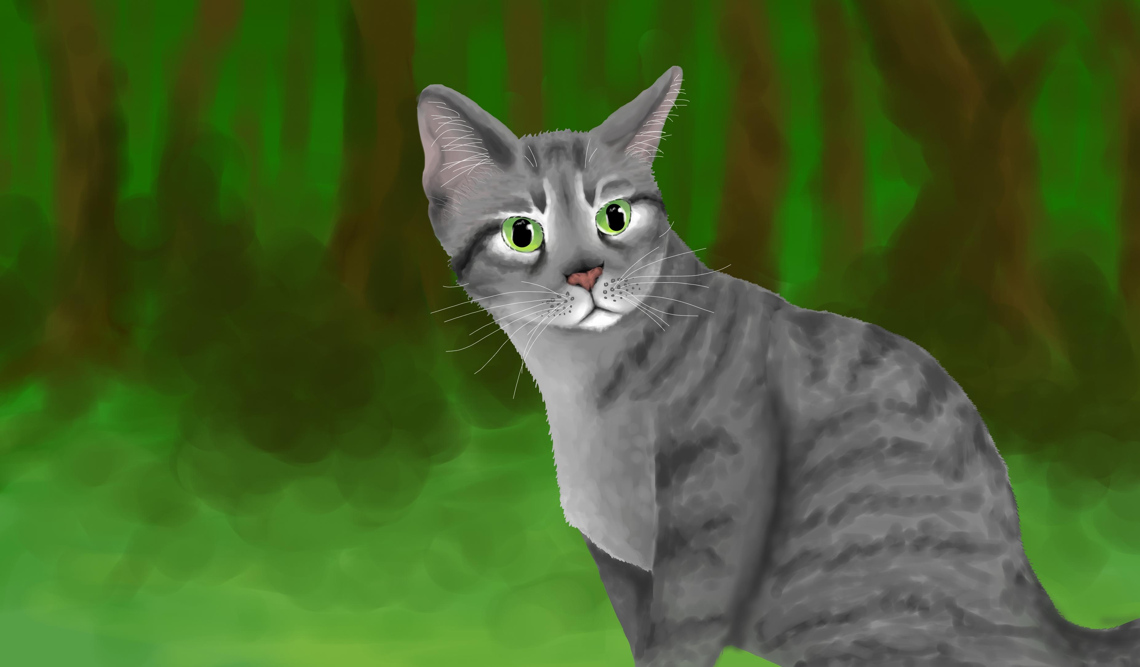 Pretty Silver Tabby Cat With Blue Eyes Silverstream