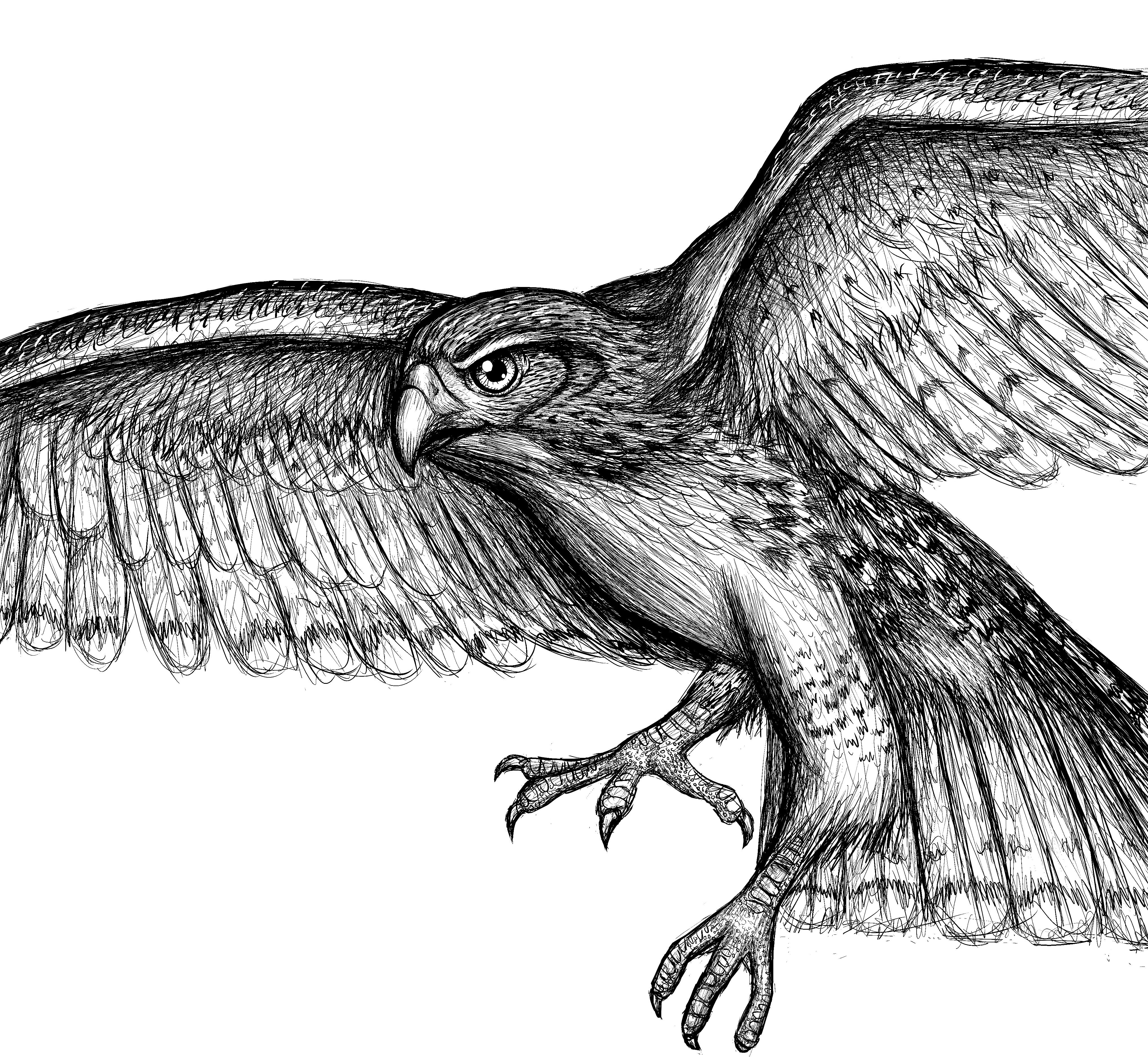Cool Bird Drawings | Www.imgkid.com - The Image Kid Has It!
