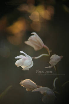 Flowers in Afternoon Light