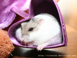 Cupcake the Hamster by lilsuika