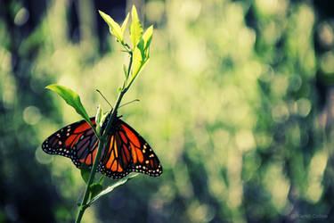 Monarch by iKier-EmJ