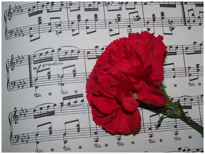 Music of Carnations by Kurura