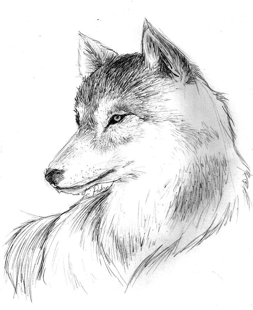 Wolfie by NikkoTakishima