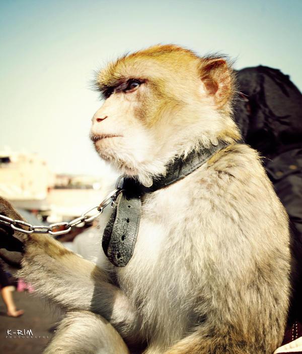 Monkey by K-RiM-Startimes2