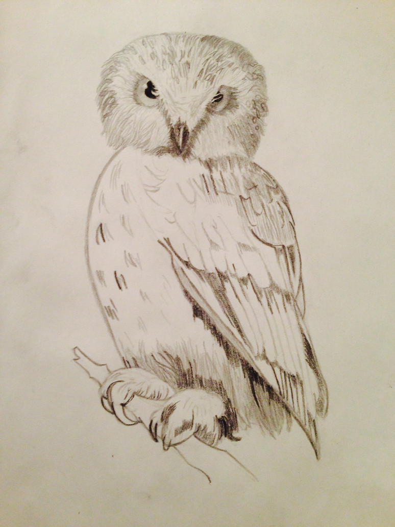 Owl: 3rd Sketch by eduardorpg64