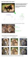 Lion mane tutorial