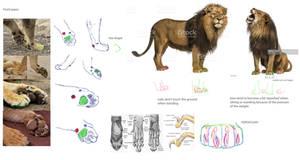 Lion paw study