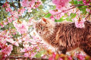 Cat on tree by Nekkael