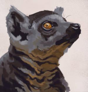 Lemur Painting