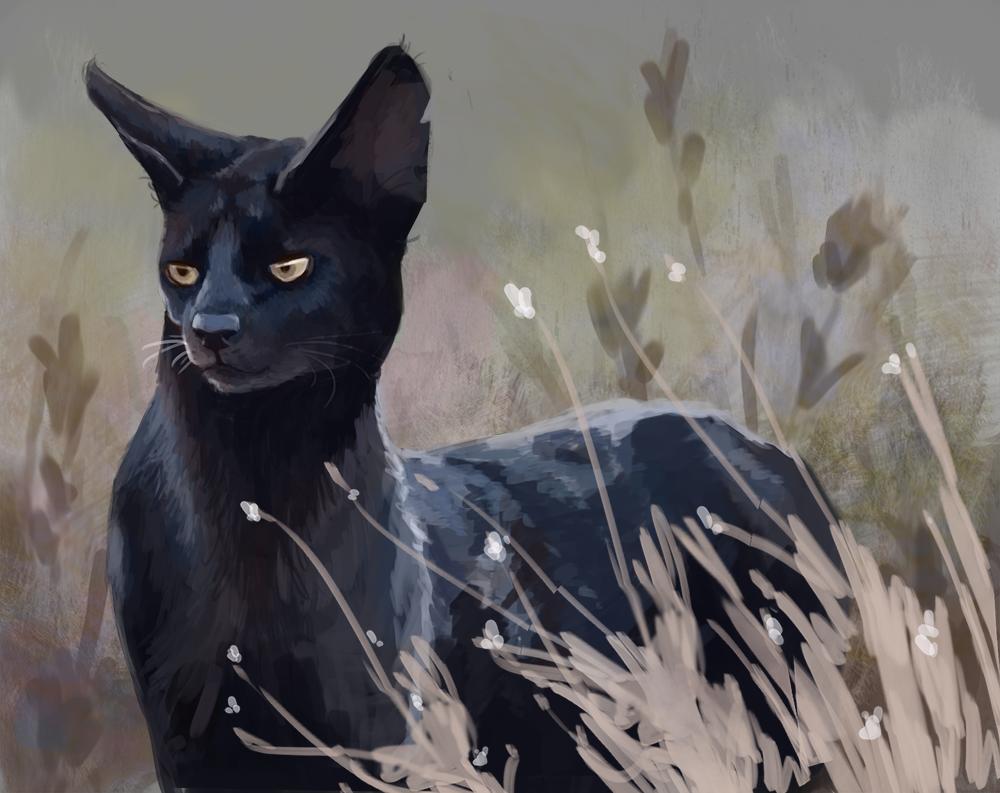 Black Serval Study
