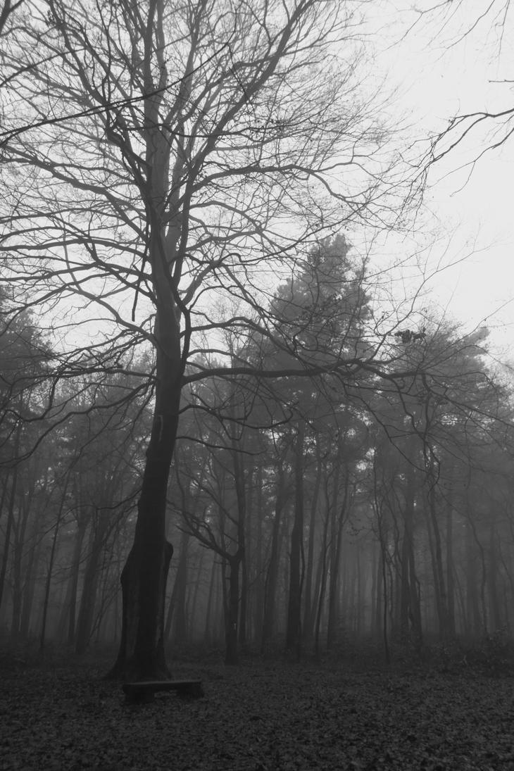 Fog by TWeber