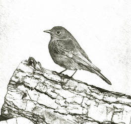 Bird by Lukas1212