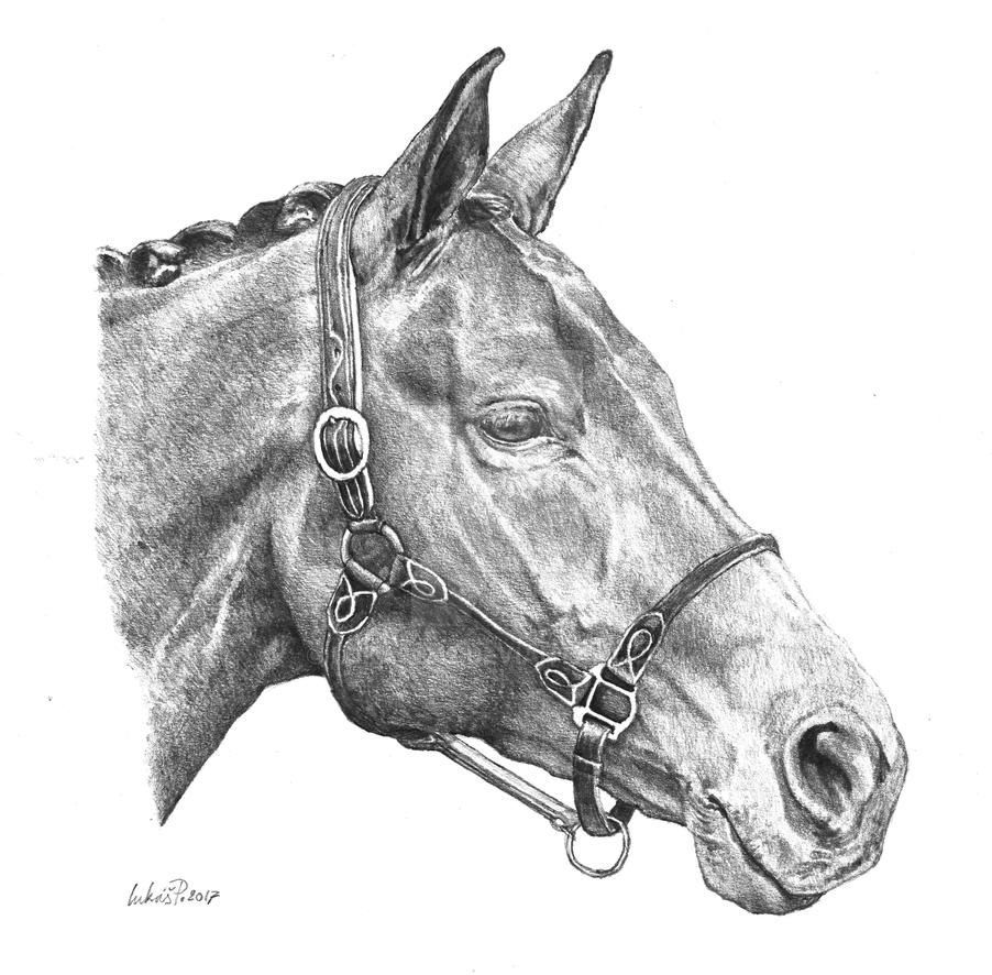 Horse by Lukas1212