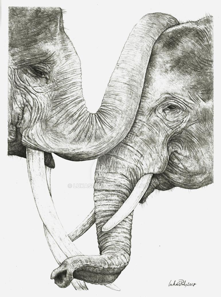 Elephants by Lukas1212