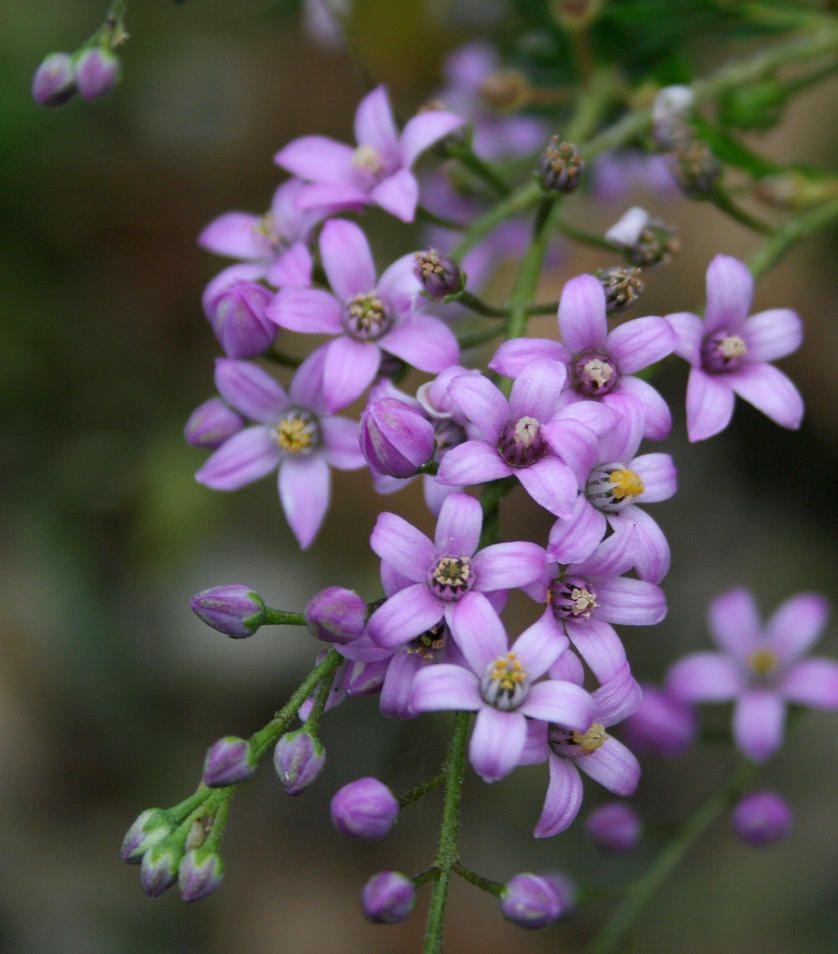 Small Purple Flower 1 by shhhhh art Stock on DeviantArt