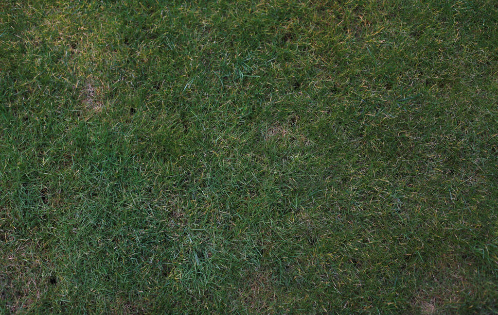 Grass Clipart 3697 likewise 449867450257751072 moreover Cartoon 20grass 20texture moreover T10 also Elephant Hd Wallpapers 2. on texture drawing