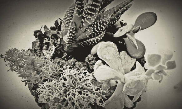 Black and White Plant Forms