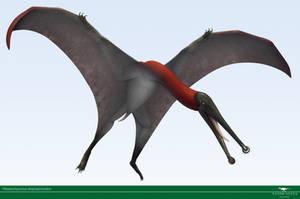 Plataleorhynchus by Vitor-Silva