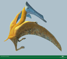 Elanodactylus by Vitor-Silva
