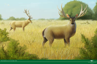 Fossil deers rising from the ashes