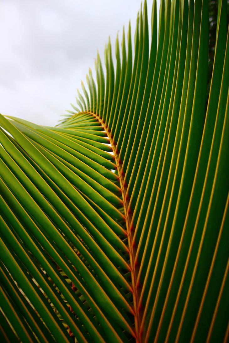 Palma by fierrolepou