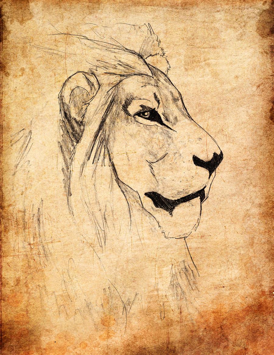 Lion side profile by onenesstp on DeviantArt