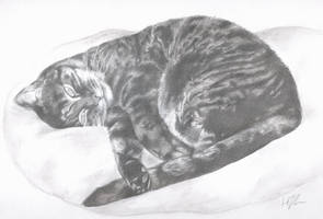 cat on a pillow by hollietree