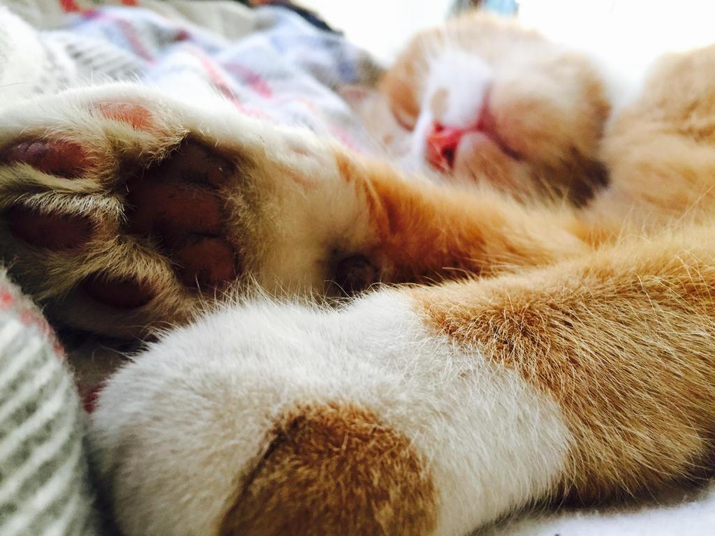 Cat Called Ham  by CherryMonsta97