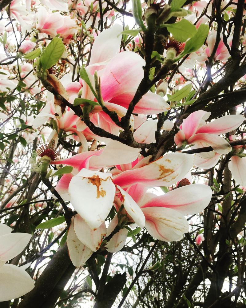 Gorgeous Flower by CherryMonsta97