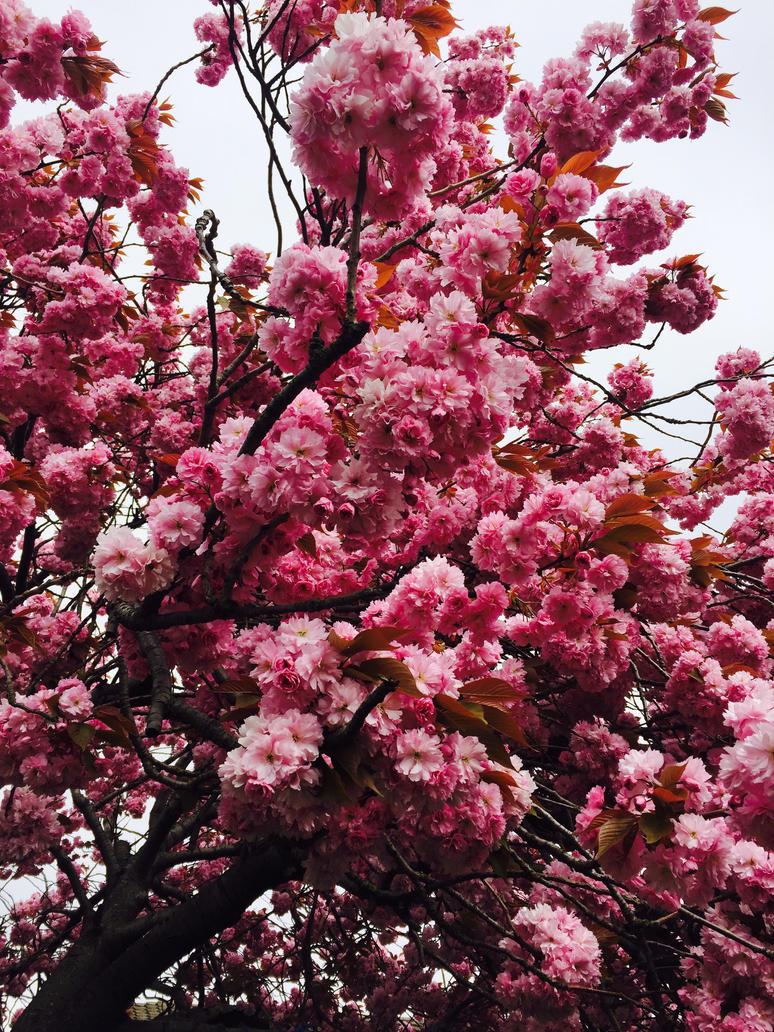 Blossom  by CherryMonsta97
