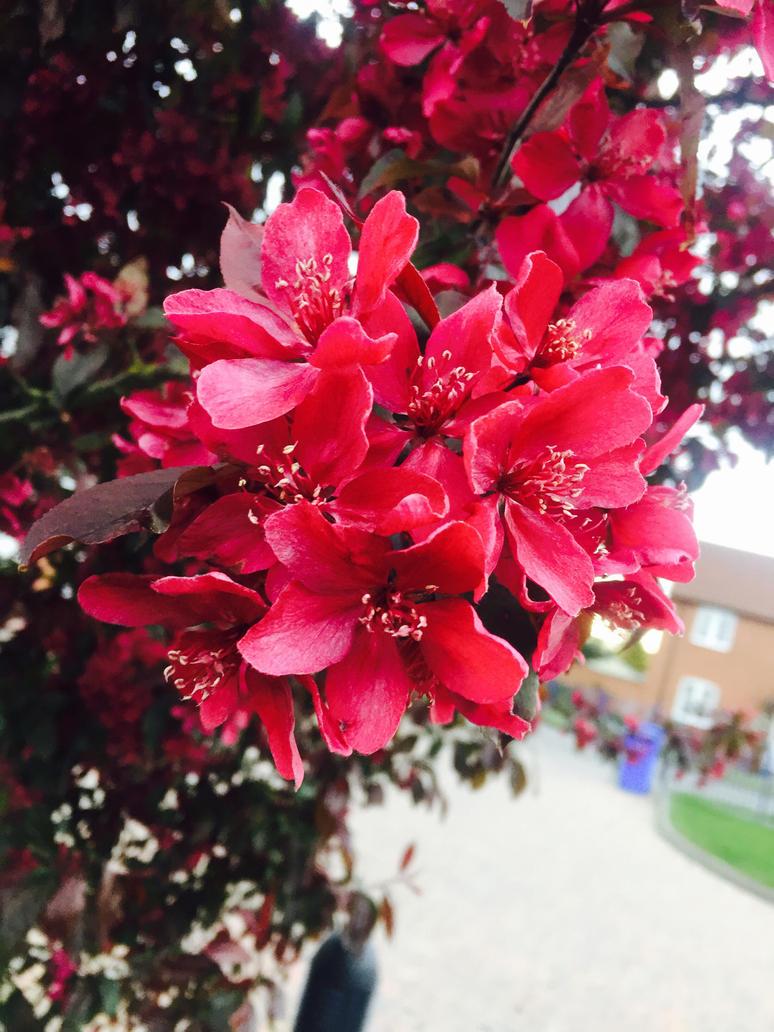 Cute flowers  by CherryMonsta97