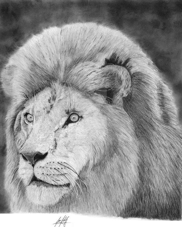 Lion Hyperrealistic Graphite Drawing By Jaschultz On Deviantart
