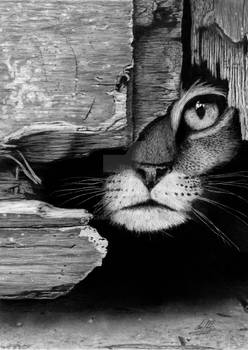 Cat In Hiding HyperRealistic Graphite Drawing