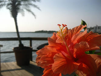 Hibiscus View II by imbored359