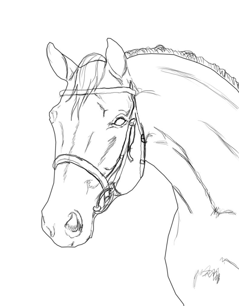 Horse lineart with Bridle by DWH