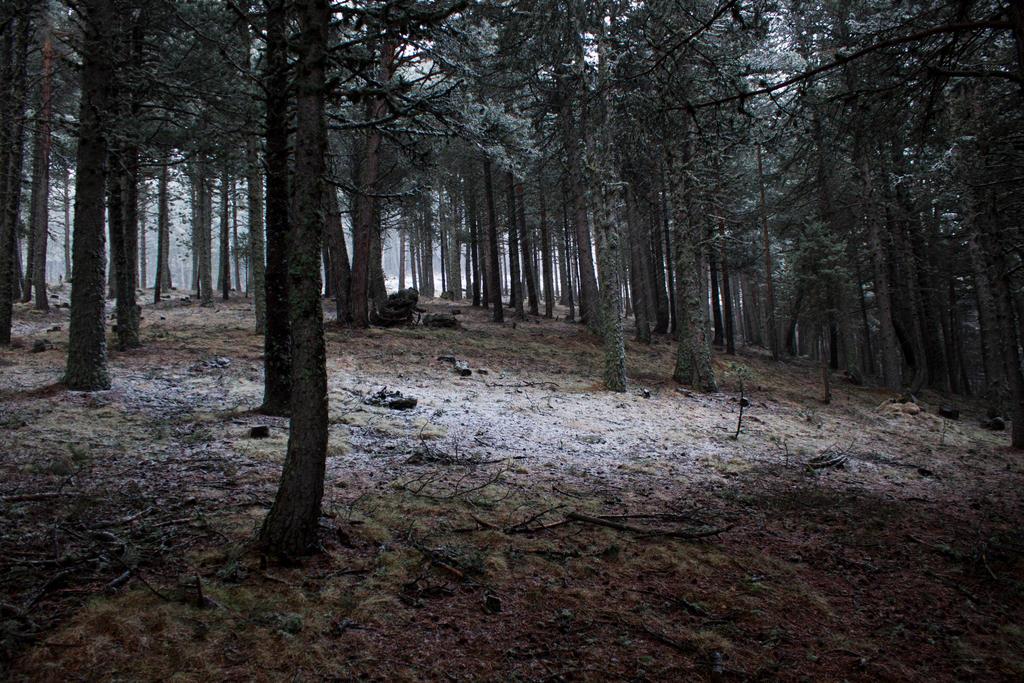Black Metal Forest By Fulgurer