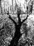 Shadows Are the Hand of God
