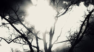 Light Strikes, Shadows Flee