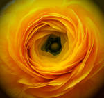Yellow Heart by XxXBiancaXxX