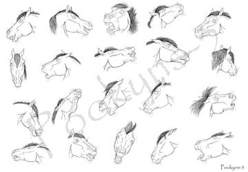 Horse expressions
