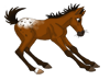 Bay Appy foal stamp by pookyhorse