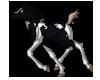 Tobiano black foal by pookyhorse