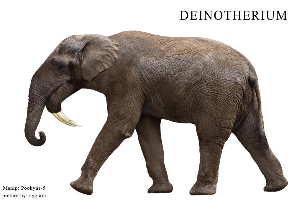 Deinotherium Vs Elephant