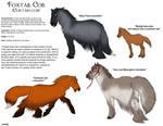 Foxtail Cob horse