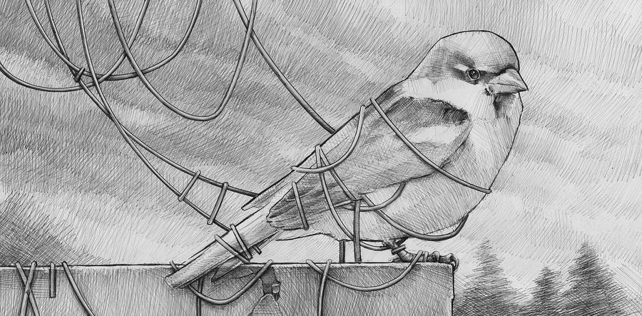 a bird by DanielGrzeszkiewicz