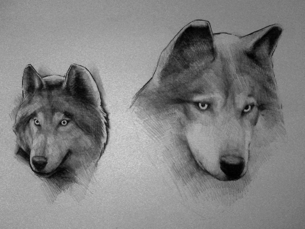 wolves by DanielGrzeszkiewicz