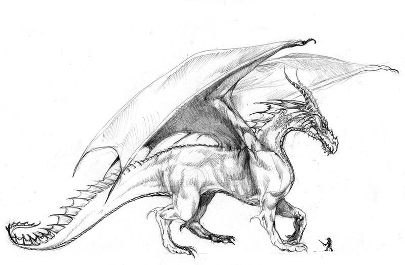 Dragon by ANIMAfelis on DeviantArt